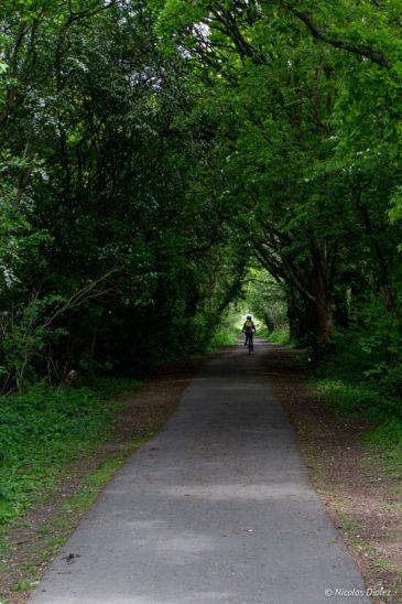 forêt Sussex Angleterre