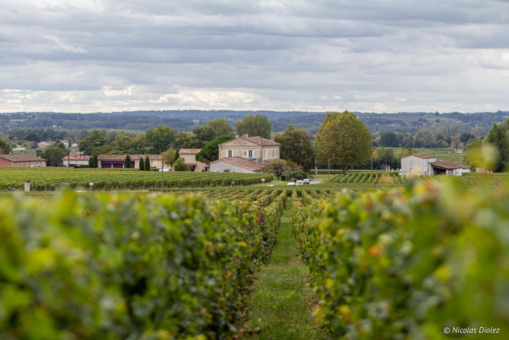 Vignes Château Angélus - DR Nicolas Diolez 2019