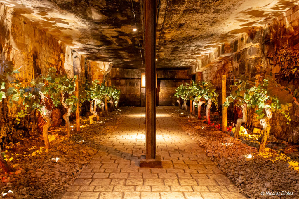 cave vignes