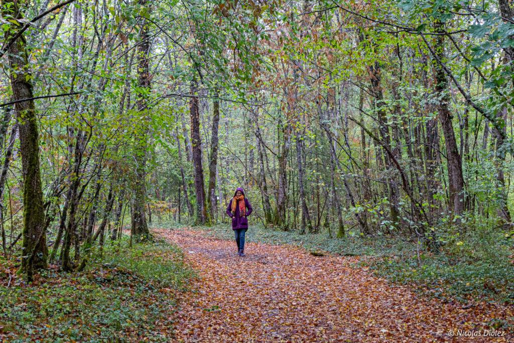 forêt Faverolles melle bon plan